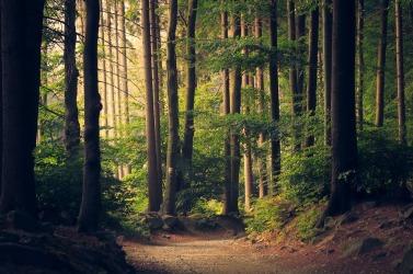 woods-945405_960_720