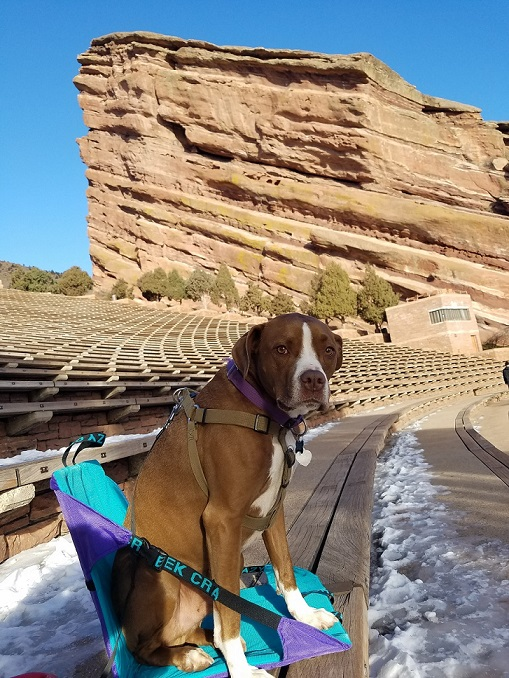 Dog sitting in a crazy creek chair at Red Rocks in Morrison, Colorado