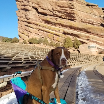 Dog sitting in a Crazy Creek chair at the Red Rocks Amphitheater in Morrison Colorado