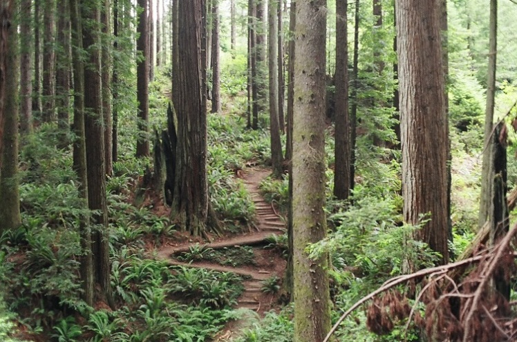 Hardwood Forest in the Southern United States